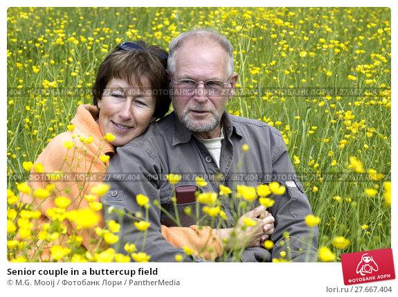 Купить «Senior couple in a buttercup field», фото № 27667404, снято 26 апреля 2019 г. (c) PantherMedia / Фотобанк Лори