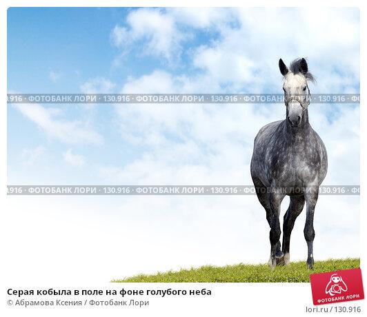 Серая кобыла в поле на фоне голубого неба, фото № 130916, снято 29 сентября 2007 г. (c) Абрамова Ксения / Фотобанк Лори