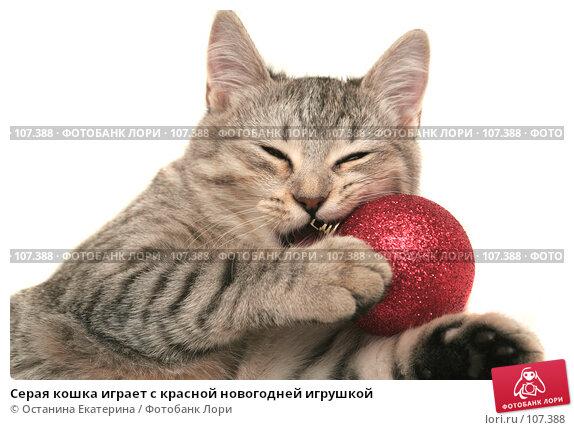 Серая кошка играет с красной новогодней игрушкой, фото № 107388, снято 19 октября 2007 г. (c) Останина Екатерина / Фотобанк Лори