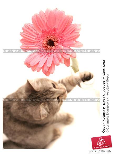 Серая кошка играет с  розовым цветком, фото № 107376, снято 16 октября 2007 г. (c) Останина Екатерина / Фотобанк Лори