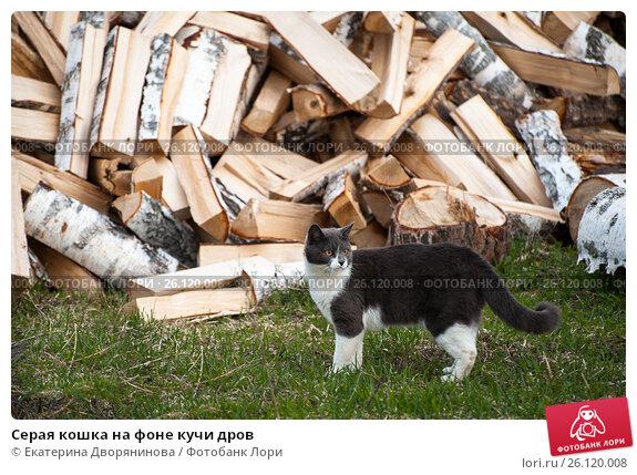 кошка на картинке с дровами фрукты грибы блюдах