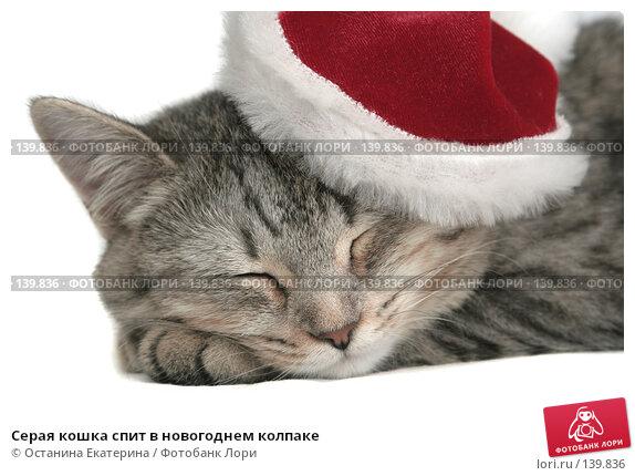 Серая кошка спит в новогоднем колпаке, фото № 139836, снято 20 ноября 2007 г. (c) Останина Екатерина / Фотобанк Лори