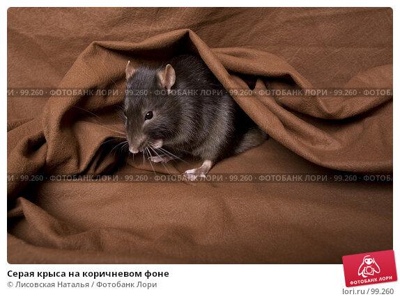 Серая крыса на коричневом фоне, фото № 99260, снято 14 октября 2007 г. (c) Лисовская Наталья / Фотобанк Лори