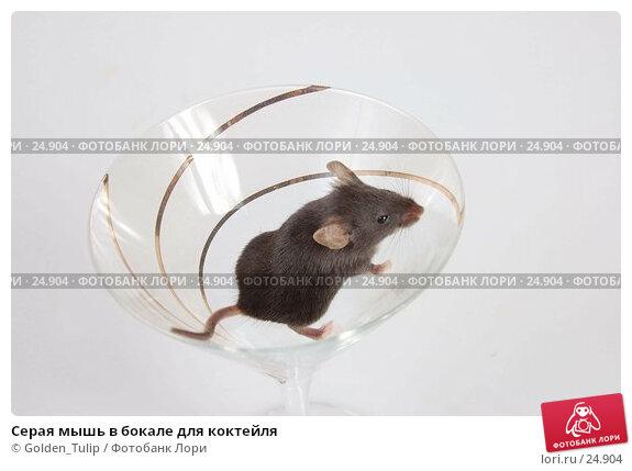 Серая мышь в бокале для коктейля, фото № 24904, снято 18 марта 2007 г. (c) Golden_Tulip / Фотобанк Лори