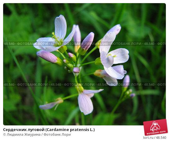 Сердечник луговой (Cardamine pratensis L.), фото № 48540, снято 27 мая 2007 г. (c) Людмила Жмурина / Фотобанк Лори