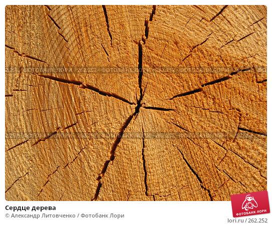 Купить «Сердце дерева», фото № 262252, снято 13 апреля 2008 г. (c) Александр Литовченко / Фотобанк Лори
