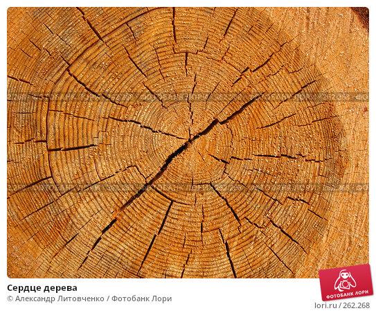 Купить «Сердце дерева», фото № 262268, снято 13 апреля 2008 г. (c) Александр Литовченко / Фотобанк Лори