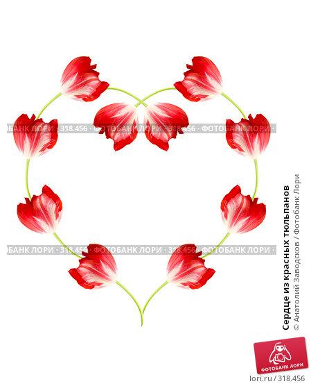 Сердце из красных тюльпанов, фото № 318456, снято 4 июня 2006 г. (c) Анатолий Заводсков / Фотобанк Лори