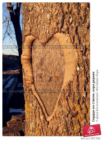 Сердце на стволе, кора дерева, фото № 167724, снято 5 января 2008 г. (c) Даша Богословская / Фотобанк Лори