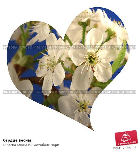 Сердце весны, фото № 166116, снято 24 января 2017 г. (c) Елена Блохина / Фотобанк Лори