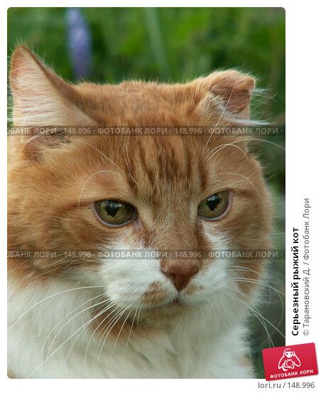 Серьезный рыжий кот, фото № 148996, снято 20 мая 2007 г. (c) Тарановский Д. / Фотобанк Лори