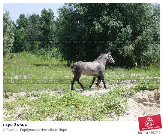 Серый конь, фото № 35712, снято 23 июля 2005 г. (c) Галина  Горбунова / Фотобанк Лори