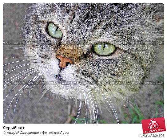 Серый кот, фото № 309608, снято 23 мая 2008 г. (c) Андрей Давиденко / Фотобанк Лори