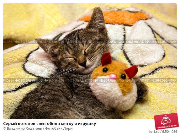 Купить «Серый котенок спит обняв мягкую игрушку», фото № 6504056, снято 1 октября 2014 г. (c) Владимир Ходатаев / Фотобанк Лори