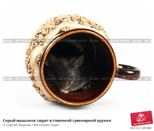 Серый мышонок сидит в глиняной сувенирной кружке, фото № 28660, снято 18 марта 2007 г. (c) Сергей Лешков / Фотобанк Лори