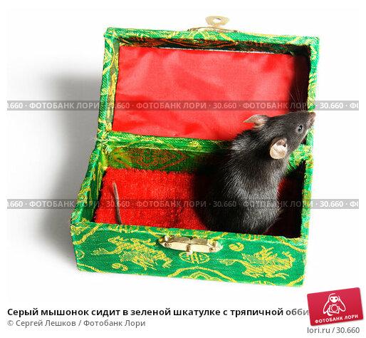 Серый мышонок сидит в зеленой шкатулке с тряпичной оббивкой, фото № 30660, снято 18 марта 2007 г. (c) Сергей Лешков / Фотобанк Лори