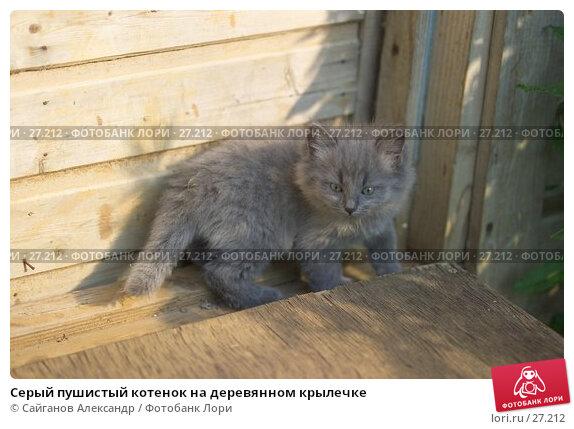 Серый пушистый котенок на деревянном крылечке, фото № 27212, снято 25 июня 2006 г. (c) Сайганов Александр / Фотобанк Лори