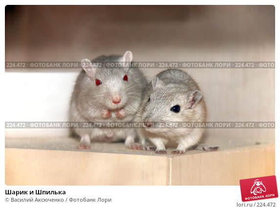Шарик и Шпилька, фото № 224472, снято 27 января 2008 г. (c) Василий Аксюченко / Фотобанк Лори