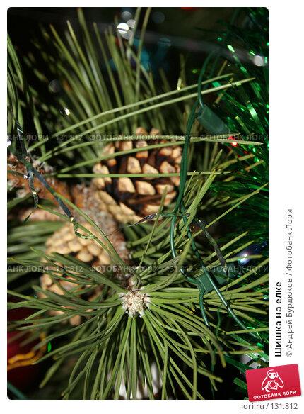 Шишка на елке, фото № 131812, снято 2 января 2007 г. (c) Андрей Бурдюков / Фотобанк Лори