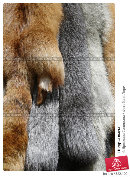Шкуры лисы, фото № 322100, снято 31 мая 2008 г. (c) Ярослава Синицына / Фотобанк Лори