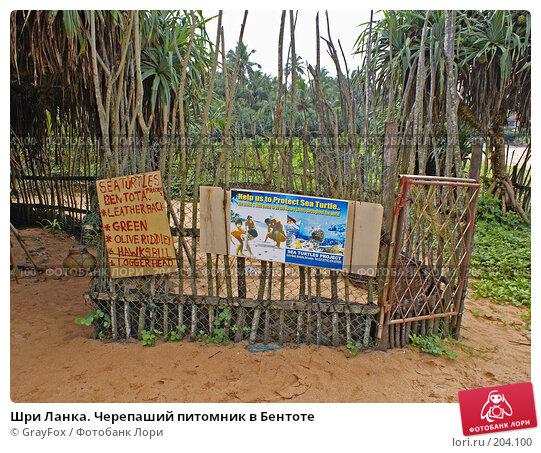Шри Ланка. Черепаший питомник в Бентоте, фото № 204100, снято 8 января 2008 г. (c) GrayFox / Фотобанк Лори