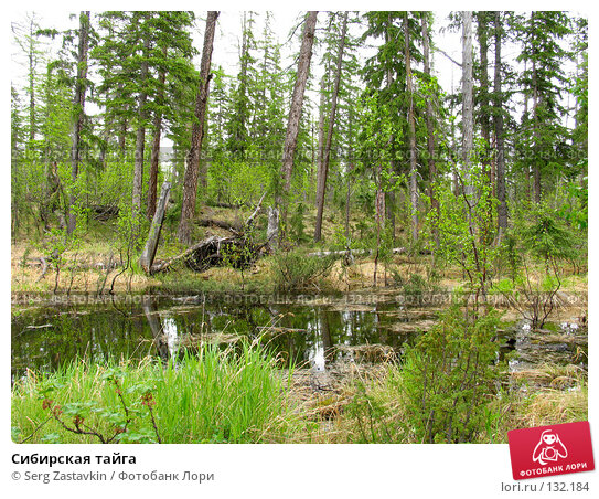 Сибирская тайга, фото № 132184, снято 3 июля 2004 г. (c) Serg Zastavkin / Фотобанк Лори