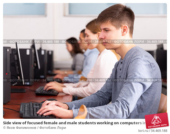 Side view of focused female and male students working on computers in classroom. Стоковое фото, фотограф Яков Филимонов / Фотобанк Лори