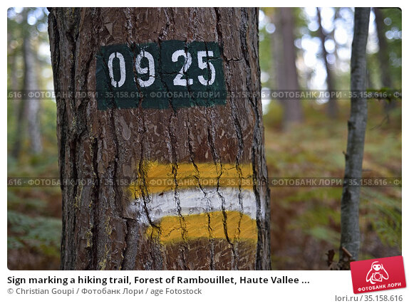 Sign marking a hiking trail, Forest of Rambouillet, Haute Vallee ... Стоковое фото, фотограф Christian Goupi / age Fotostock / Фотобанк Лори