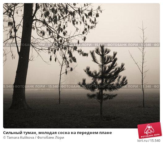 Сильный туман, молодая сосна на переднем плане, фото № 15540, снято 21 декабря 2006 г. (c) Tamara Kulikova / Фотобанк Лори