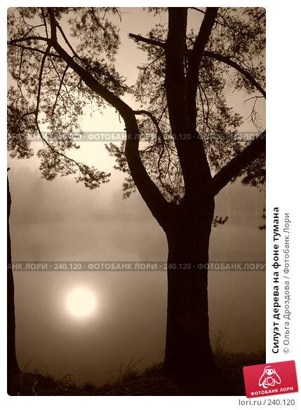 Силуэт дерева на фоне тумана, фото № 240120, снято 22 января 2017 г. (c) Ольга Дроздова / Фотобанк Лори