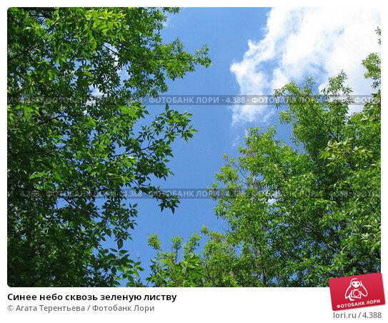Синее небо сквозь зеленую листву, фото № 4388, снято 21 мая 2006 г. (c) Агата Терентьева / Фотобанк Лори