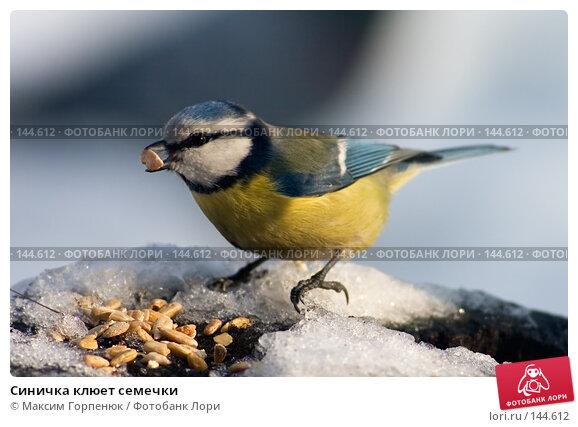 Синичка клюет семечки, фото № 144612, снято 30 декабря 2004 г. (c) Максим Горпенюк / Фотобанк Лори