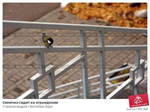 Синичка сидит на ограждении, фото № 191764, снято 6 октября 2006 г. (c) Шахов Андрей / Фотобанк Лори