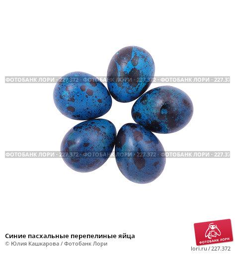 Синие пасхальные перепелиные яйца, фото № 227372, снято 15 марта 2008 г. (c) Юлия Кашкарова / Фотобанк Лори