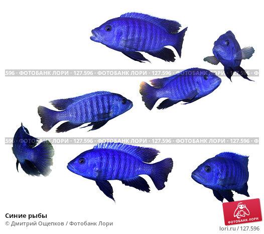 Синие рыбы, фото № 127596, снято 27 октября 2016 г. (c) Дмитрий Ощепков / Фотобанк Лори