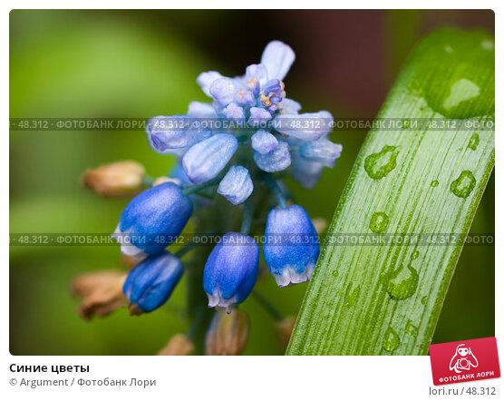 Синие цветы, фото № 48312, снято 8 июня 2005 г. (c) Argument / Фотобанк Лори