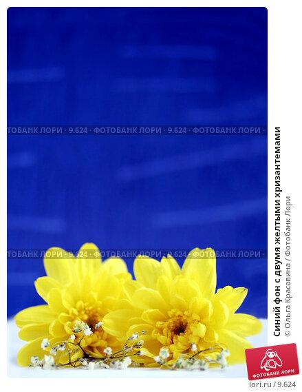 Синий фон с двумя желтыми хризантемами, фото № 9624, снято 29 июня 2006 г. (c) Ольга Красавина / Фотобанк Лори