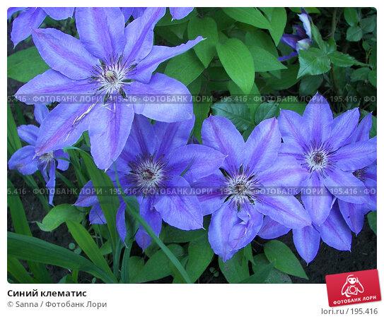 Синий клематис, фото № 195416, снято 30 мая 2007 г. (c) Sanna / Фотобанк Лори