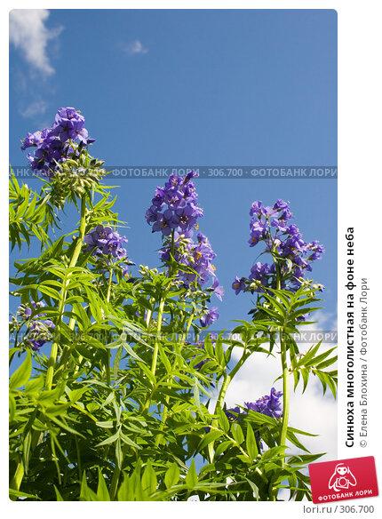 Купить «Синюха многолистная на фоне неба», фото № 306700, снято 27 мая 2008 г. (c) Елена Блохина / Фотобанк Лори