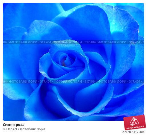 Синяя роза, фото № 317404, снято 29 марта 2017 г. (c) ElenArt / Фотобанк Лори