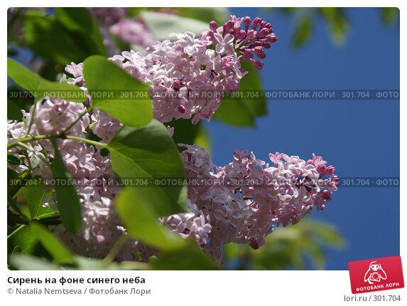 Купить «Сирень на фоне синего неба», эксклюзивное фото № 301704, снято 9 мая 2008 г. (c) Natalia Nemtseva / Фотобанк Лори