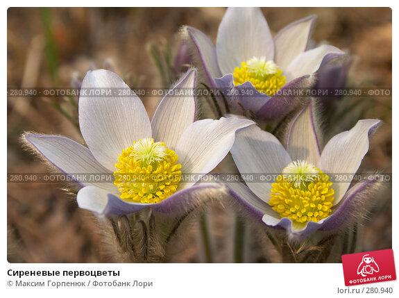 Сиреневые первоцветы, фото № 280940, снято 1 апреля 2007 г. (c) Максим Горпенюк / Фотобанк Лори