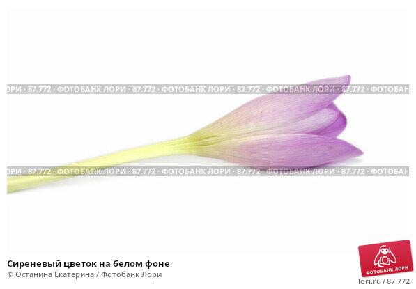 Купить «Сиреневый цветок на белом фоне», фото № 87772, снято 17 сентября 2007 г. (c) Останина Екатерина / Фотобанк Лори