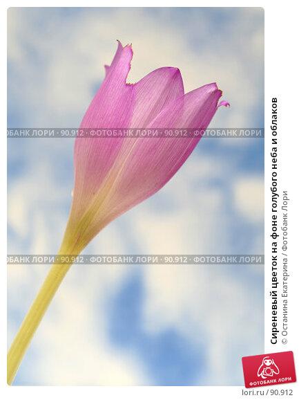 Сиреневый цветок на фоне голубого неба и облаков, фото № 90912, снято 18 сентября 2007 г. (c) Останина Екатерина / Фотобанк Лори