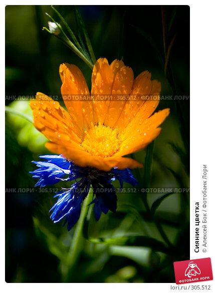 Сияние цветка, эксклюзивное фото № 305512, снято 19 июля 2007 г. (c) Алексей Бок / Фотобанк Лори