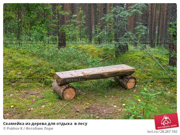 Купить «Скамейка из дерева для отдыха  в лесу», фото № 28267192, снято 8 августа 2017 г. (c) Pukhov K / Фотобанк Лори