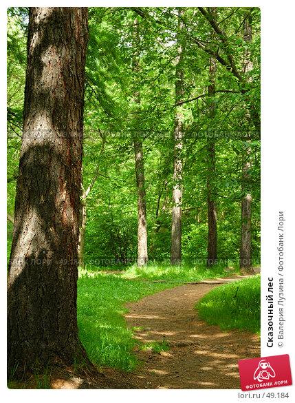 Сказочный лес, фото № 49184, снято 1 июня 2007 г. (c) Валерия Потапова / Фотобанк Лори