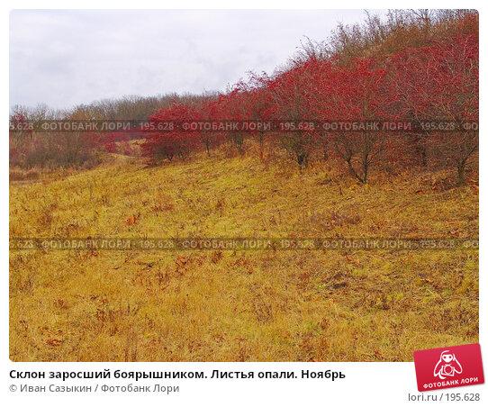 Склон заросший боярышником. Листья опали. Ноябрь, фото № 195628, снято 13 ноября 2004 г. (c) Иван Сазыкин / Фотобанк Лори