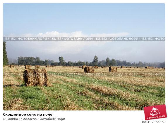 Скошенное сено на поле, фото № 133152, снято 5 сентября 2007 г. (c) Галина Ермолаева / Фотобанк Лори