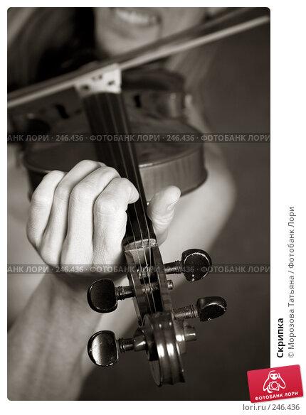 Скрипка, фото № 246436, снято 3 апреля 2008 г. (c) Морозова Татьяна / Фотобанк Лори